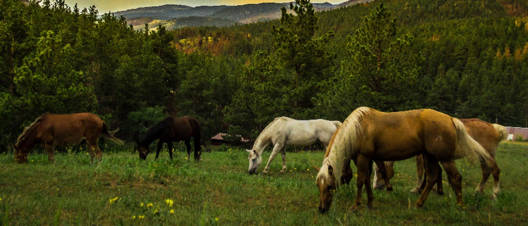 Veteran Equine Trust